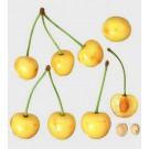 Dönnisens Gelbe Knorpelkirsche